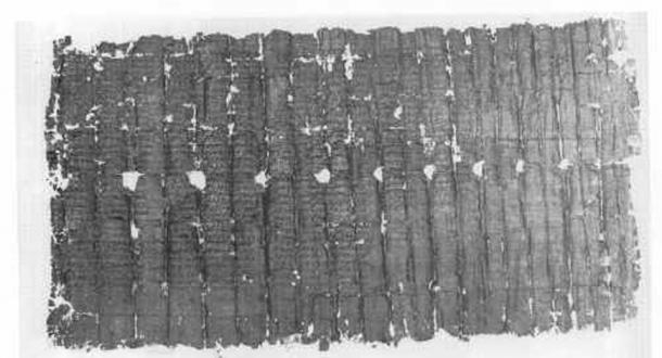 Herculaneum Papyrus 1428: Philodemus, On Piety.
