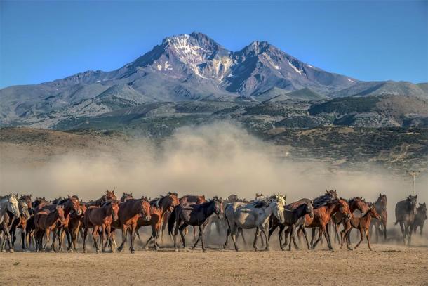 Herd of wild mustang horses. (klazing / Adobe stock)