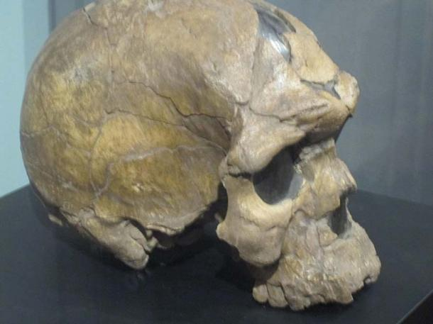 Herto skull.