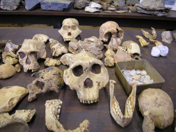 Hominid fossils in South Africa. (CC BY SA 3.0)