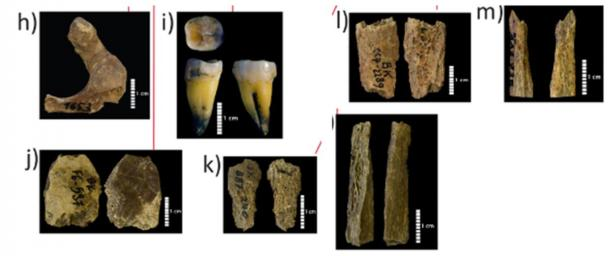 Hominin remains found at the cave site. (Hublin et al. 2020)