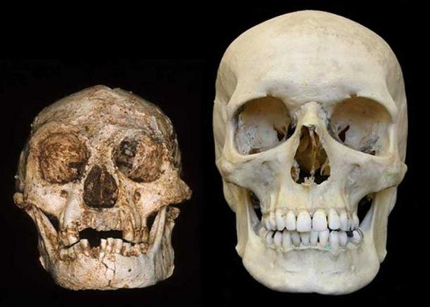 "Homo floresiensis skull (the ""Hobbit"") (left) and a modern human skull (right). Credit: Professor Peter Brown, University of New England"