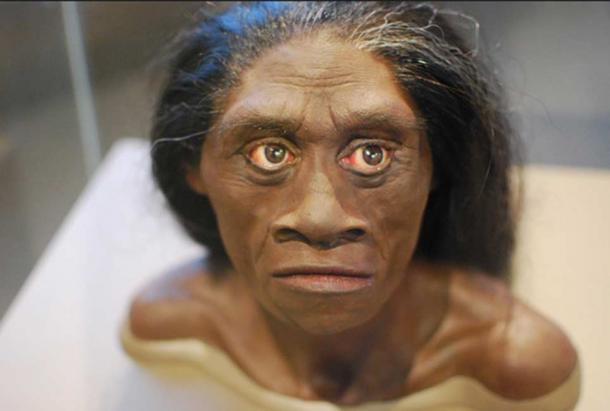 A reconstruction from a Homo floresiensis skull