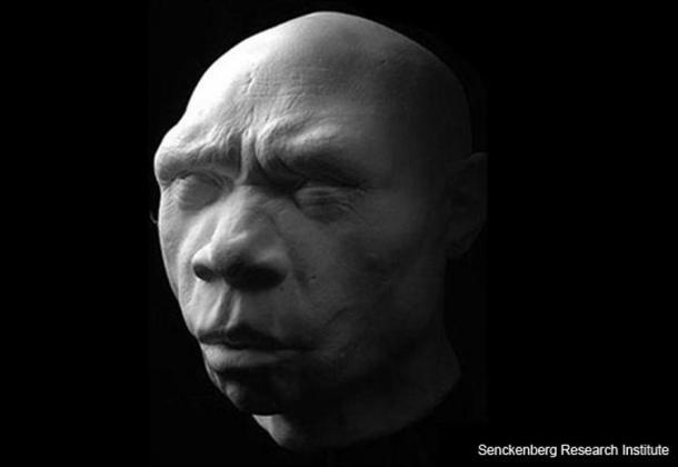 "Homo heidelbergensis. Reconstruction of 'Miguelon', the name given to the remains of an adult male belonging to the Homo heidelbergensis group, discovered in Sima de los Huesos (""the pit of bones""), Spain, in 1993."