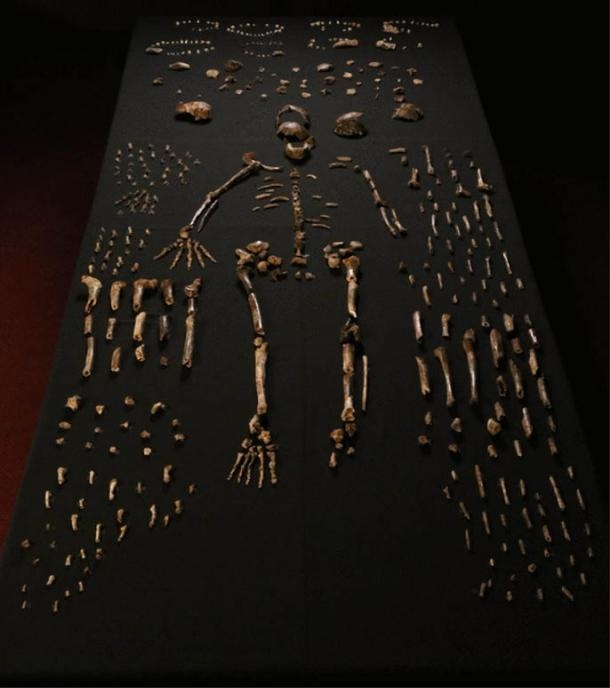 "The so-called ""Homo naledi"" fossilized bones recovered from the Rising Star cave in South Africa."