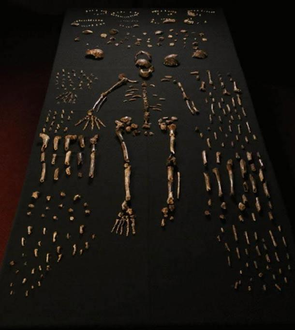 """The so-called """"Homo naledi"""" fossilized bones recovered from the Rising Star cave in South Africa."""