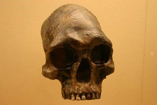 Homo sapiens 13000 to 9000 years old. Smithsonian Natural History Museum. (CC BY SA 2.0)
