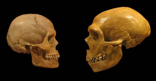 A Homo sapiens skull (left) and a Neanderthal skull: different but also extremely similar when it came to speech capabilities. (hairymuseummatt (original photo), DrMikeBaxter (derivative work) / CC BY-SA 2.0)
