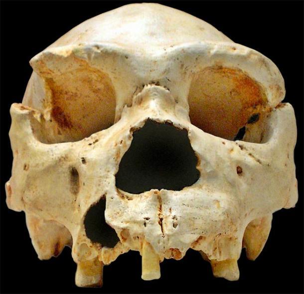 Homo heidelbergensis Cranium 5 found Sima de los Huesos (CC BY-SA 2.5)