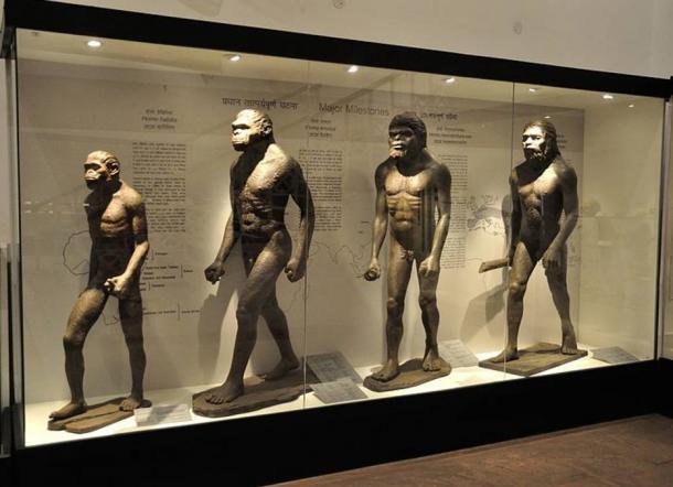 A 'Major Milestones' in Human Evolution Diorama in Kolkata, India.