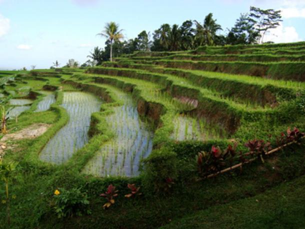 Human invasive farming alters the environment. (MGA73bot2 / CC BY-SA 4.0)