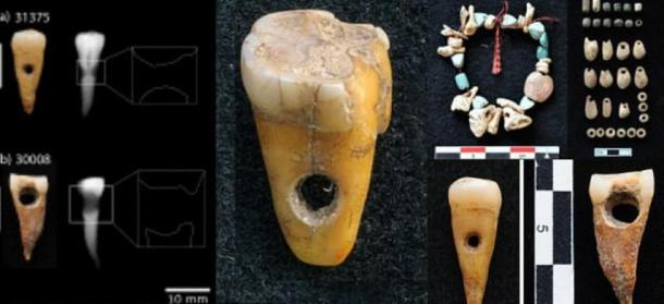 Human teeth found at site together with a representation of the type of necklace that could have been used. (Source: Scott D. Haddow / University of Copenhagen)