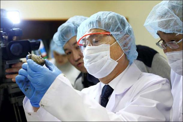 South Korean cloning guru Hwang Woo-suk took is believed to have taken samples from one of the cubs.