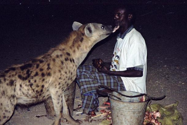 Hyenas and a man.