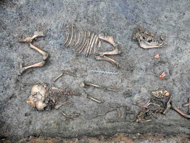 Once the vases were removed during the excavation, the archaeologists had a better view of the infant skeleton surrounded by a pet dog and a pig. (Ivy Thomson / INRAP)