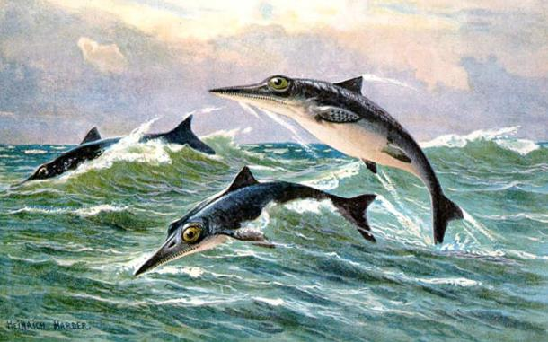 Ichthyosaur of an undetermined genus. 1916.