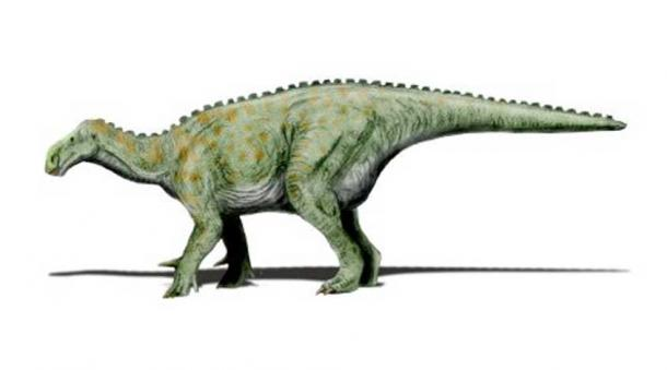 Modern restoration showing Iguanodon in quadrupedal pose.