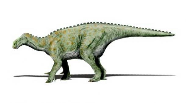 Modern restoration showing Iguanodon in quadrupedal pose.