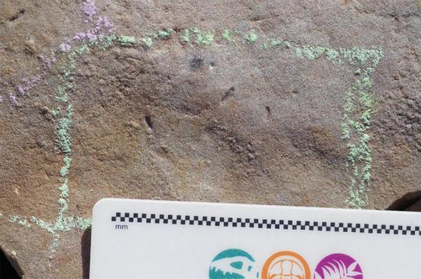 Ikaria wariootia impressions in stone. (Droser Lab/UCR)