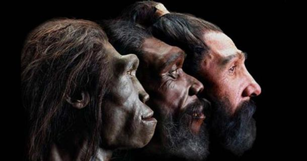 Image of reconstructed faces of three early humans in profile view.