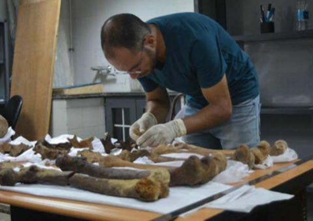 Initial anthropological assessment. (Image: Ministry of Antiquities)