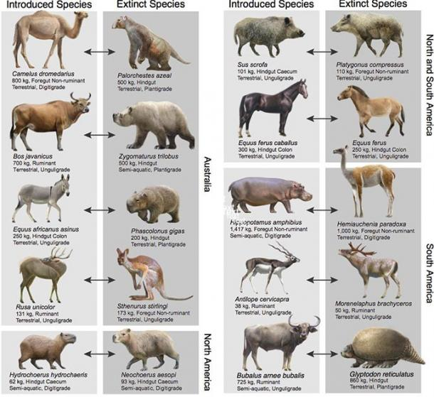 Introduced herbivores share many key ecological traits with extinct species across the world. (Oscar Sanisidro / University of Massachusetts)