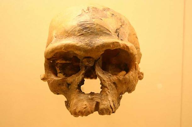 Irhoud 1, approx. 160,000 yrs old, Smithsonian Natural History Museum. (Ryan Somma/CC BY SA 2.0)
