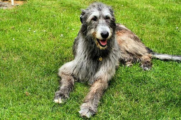 viking dog breeds