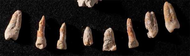 Los dientes con incrustaciones de jade y pirita del diplomático de El Palmar, Ajpach 'Waal. (Kenichiro Tsukamoto / Universidad de California, Riverside)