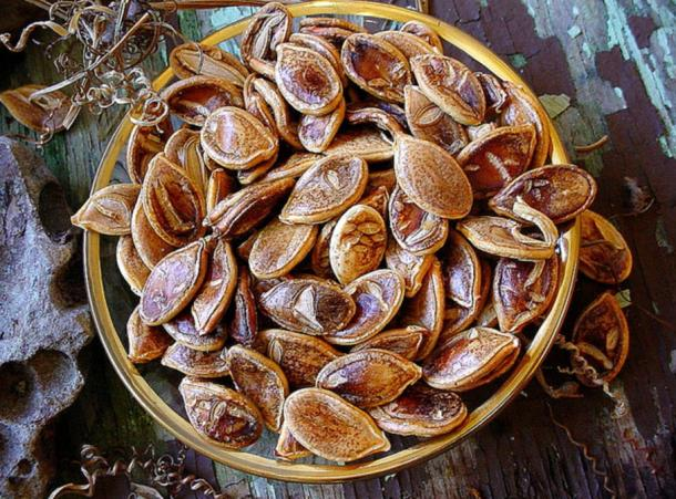 abocha squash seeds; these are not the same squash seeds as those recently revived by Native Americans.