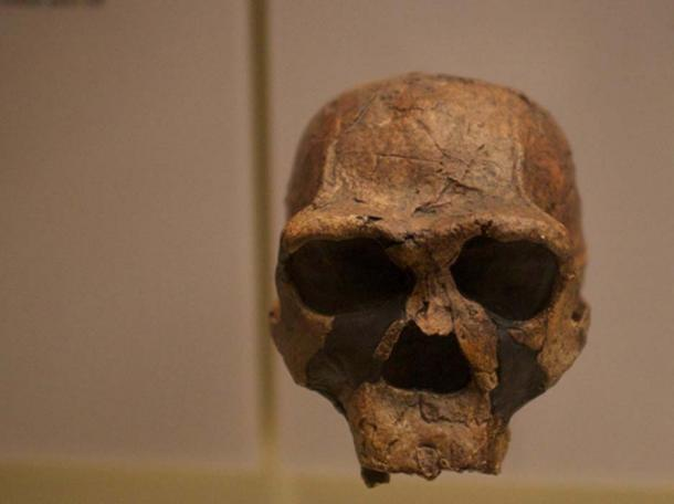 Kenyan Homo Erectus skull (West, H.J / CC BY-SA 2.0)