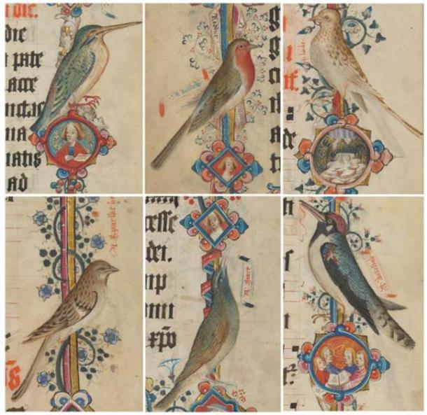 Kingfisher (kyngefystere), robin (roddock), skylark (larke), female house sparrow (sparwe hen), starling (stare), spotted woodpecker (wodewale): Add MS 74236, pp. 383, 382, 369, 377, 385, 373 (details). (Public Domain)