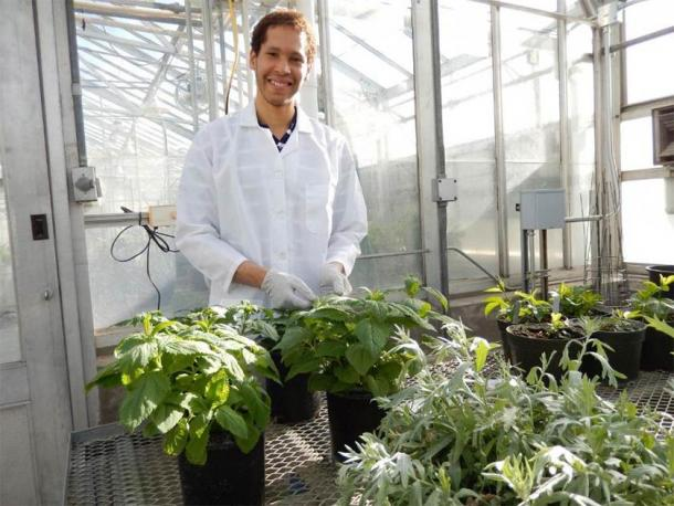 Korey Brownstein with some of the plants. (WSU)