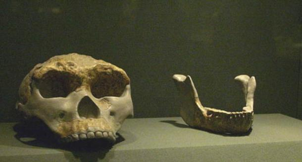 Lantian Man skull and jaw replicas, Shaanxi History Museum