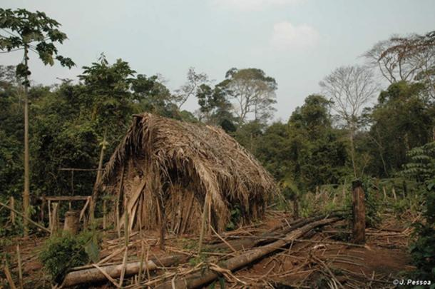 "Here, the ""Last of his Tribe's"" house and garden. Credit: J. Pessoa, Survival International"