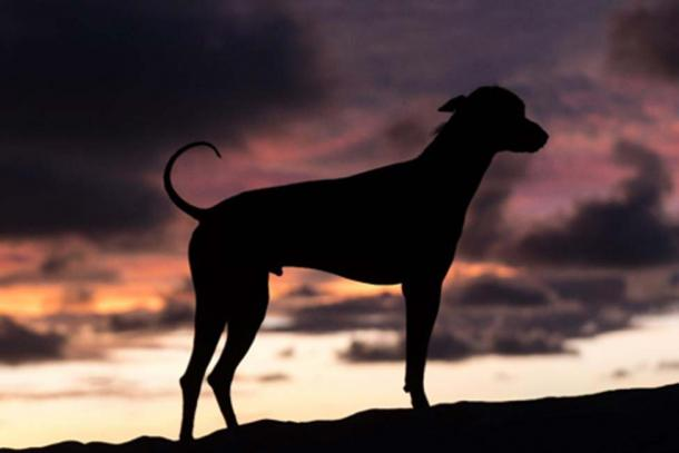 Less than three decades ago Peruvian hairless dogs were on the very brink of extinction. (Barna Tanko /Adobe Stock)