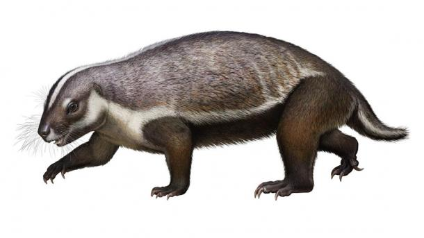 Life-like reconstruction of Adalatherium hui ('crazy beast'), a new gondwanatherian mammal from the Late Cretaceous of Madagascar. (Andrey Atuchin / Denver Museum of Nature & Science)