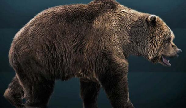 Life restoration of the extinct cave bear. (Sergiodlarosa / CC BY-SA 3.0)