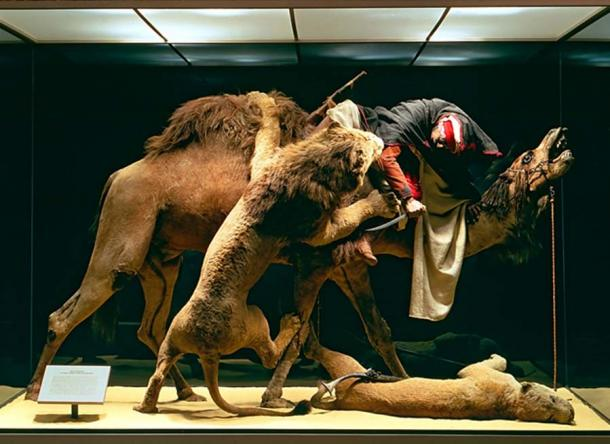 The Lion Attacking a Dromedary diorama on display at the Carnegie Museum of Natural History.
