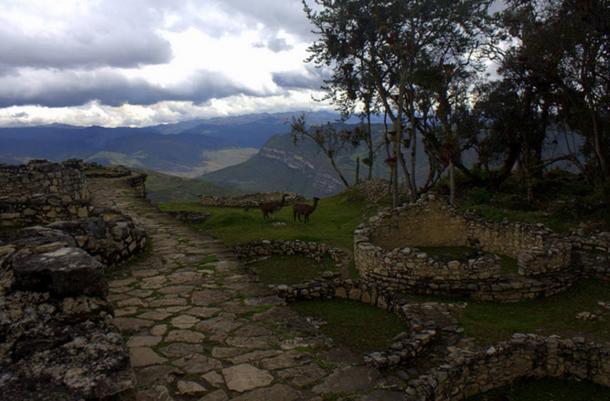 Llamas enjoying the ruins of the Kuelap citadel, in Peru.