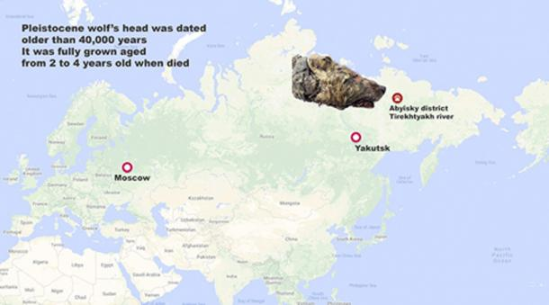 Local man Pavel Efimov found the Pleistocene wolf's head. (Siberian Times)