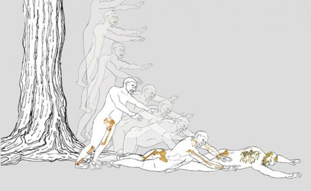 Reconstruction of Lucy's fall.