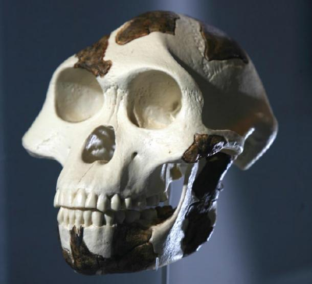 Lucy's skull, the cavities for arteries are smaller than great apes. (Tadias Magazine / CC BY-SA 2.0)