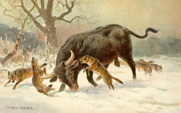 A painting by Heinrich Harder showing an aurochs fighting off a Eurasian wolf pack.