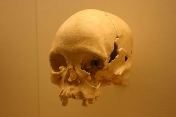 A cast of Luzia's skull at the National Museum of Natural History.