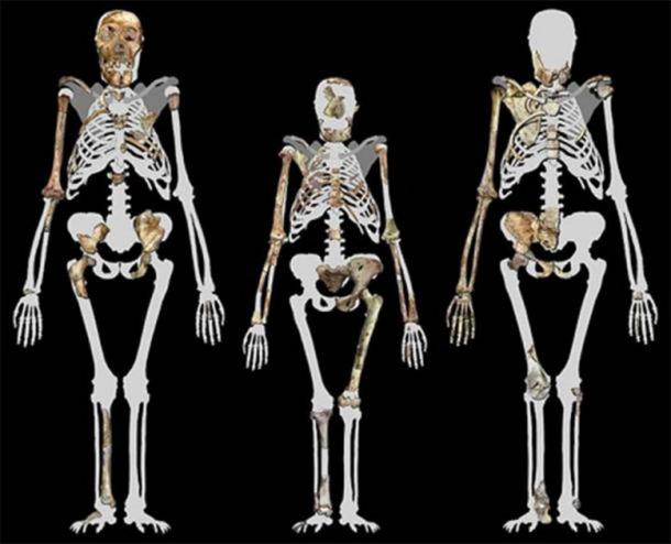 Malapa Hominin 1 (MH1) left, Lucy (AL 288-1 (Center), and Malapa Hominin 2 (MH2) right. (Image compiled by Peter Schmid courtesy of Lee R. Berger, University of the Witwatersrand. (CC BY-SA 3.0)