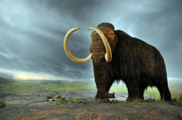 Mammoth model exhibited at the Royal British Columbia Museum in Victoria, Canada. Some scientists believed that warm temperatures near the North Pole could be evidence that the mammoths lived on…in the hollow earth.