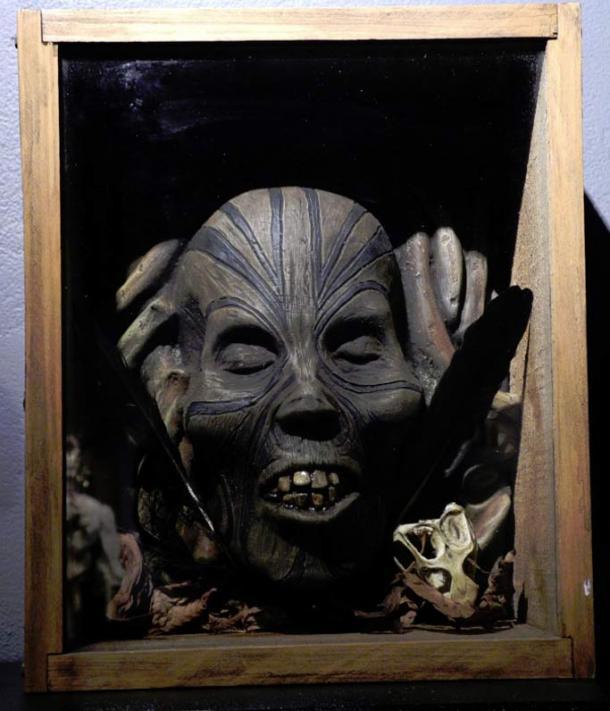 A Maori Mokomokai preserved head