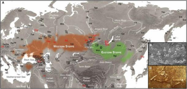 Map of the Eurasian steppes. (A) Distribution of the Western (brown) and Eastern (green) steppes and the locations of ancient (red) and modern (black) populations discussed in study. A box indicates the location of the LBA burial mounds surveyed in the Arbulag soum of Khövsgöl aimag. (B) Enhanced view of LBA burial mounds (white circles) and burial clusters selected for excavation (boxes a–f) with the number of analyzed individuals in parentheses. (C) Photograph of burial 2009-52 containing the remains of ARS026, a genetic outlier with Western steppe ancestry. (Choongwon Jeong et al., 2018)