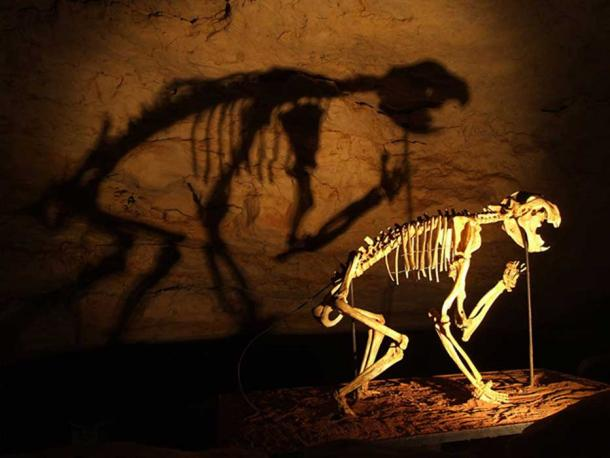 Marsupial lion skeleton in Naracoorte Caves, South Australia.